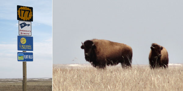 (L) Entering the Flint Hills Scenic Byway. (R) Moody bison stares down curious hikers.