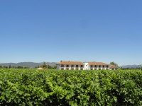 Our overnight stop in the Colchagua Valley was Hotel Terraviña, built right amongst the vines.