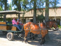Laura Hartwig winery provides free horse and carriage rides around the grounds, great for kids.