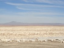 Our first excursion began at the Salar de Atacama, the largest salt flat in Chile. The surface is made up of minerals left over from evaporating water. Not surprisingly, this is the driest non-polar desert on Earth.