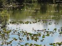 Count the gators along the anhinga trail.