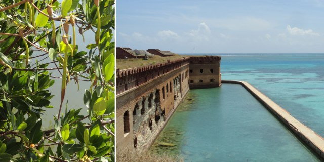 Closeup of Mangroves at Biscayne, View from the rampart of Fort Jefferson.