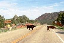 Utah traffic jam.