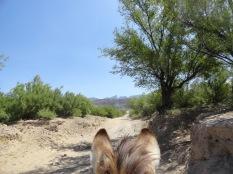 Burro View