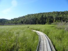 Our first Canadian National Park, Pukaskwa (PUCK-uh-saw). This long boardwalk crossed a big wetland along the Coastal Trail.