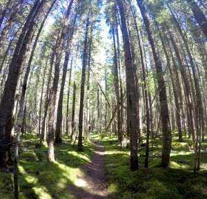 Pukaskwa Coastal Trail