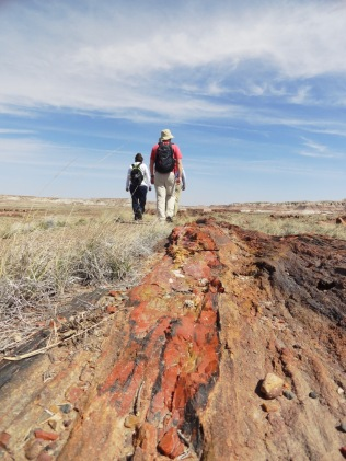 Our second national park of the trip was Petrified Forest. The varying colors in the rock logs are created by different minerals.