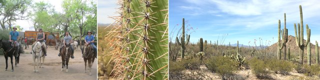 saguaro_header