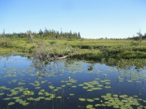 The Bog boardwalk trail allows close up views of the unique highland bog landscape. Carnivorous pitcher plants and orchids are common here.