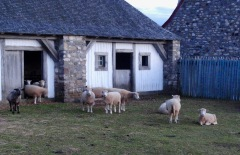 The village sheep did not trust us as we wandered the town alone at twilight.
