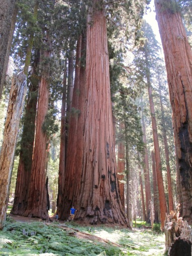 Sequoia photos need humans in them for scale.