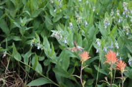 Hummingbird getting its nectar on at Cedar Breaks National Monument.