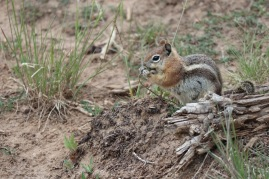 Cutest chipmunk ever!