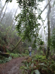Misty hike to Langdale Falls.
