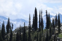 Endless compositions of trees and mountains surrounded us at the summit of Mt. Revelstoke.