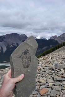 We booked an amazing ranger-guided (Hi Ardelle!) hike up an extremely steep trail to the fossil field on Mt. Stephen in Yoho. Trilobites galore!