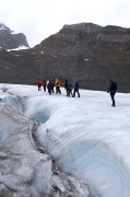 We took a great guided hike on the Athabasca Glacier with icewalks.com