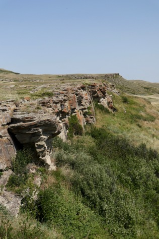 South of Calgary is Head-Smashed-In Buffalo Jump, an UNESCO World Heritage Site. Indigenous peoples herded bison off the edge of this bluff in a well-orchestrated group hunt.