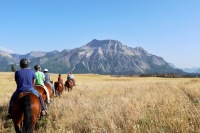 We took a 2-hour ride with Alpine Stables on our first evening in Waterton Lakes. We saw three bears from horseback.