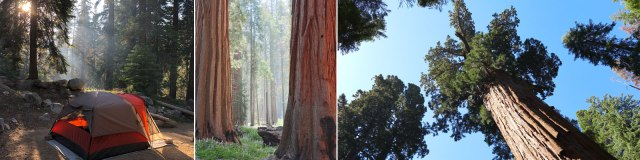 sequoia_header